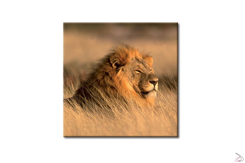 Quadro con animali selvatici The Lion