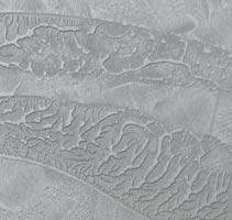 Dune Zinco